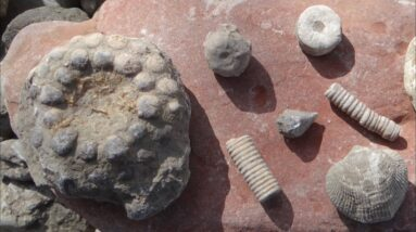 Fossils Galore at Partridge Point Park