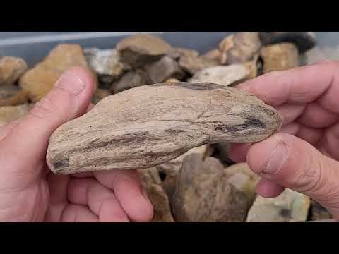 Petrified Wood, Part of a gifted collection - Pt 8 #thefinders